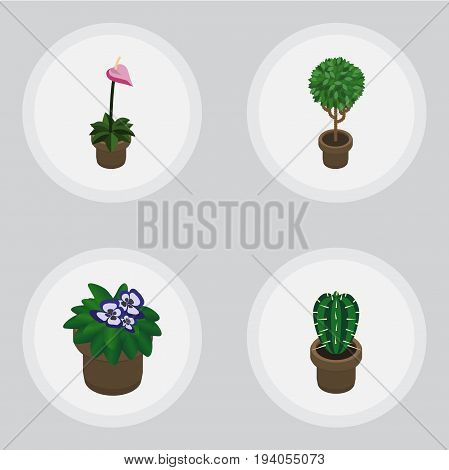 Isometric Plant Set Of Grower, Peyote, Tree And Other Vector Objects. Also Includes Peyote, Flower, Cactus Elements.