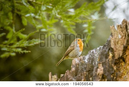 Owl, Bird, Animal, Nature, Adult, Beak, Big, Branch, Bright, Cold, Countryside, Europe, European, Ey
