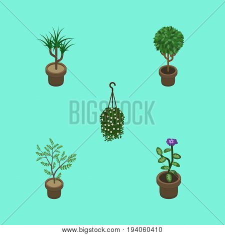 Isometric Houseplant Set Of Blossom, Houseplant, Fern And Other Vector Objects. Also Includes Botany, Blossom, Plant Elements.
