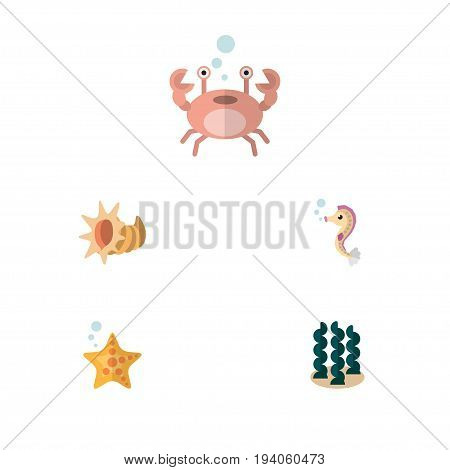 Flat Icon Marine Set Of Seashell, Cancer, Alga And Other Vector Objects. Also Includes Seashell, Hippocampus, Cancer Elements.