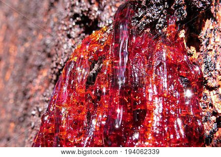 Red resin sap flowing from an Australian Eucalyptus gum tree