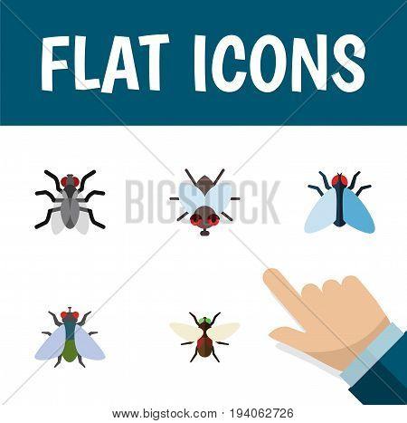 Flat Icon Fly Set Of Bluebottle, Fly, Housefly And Other Vector Objects. Also Includes Dung, Gnat, Mosquito Elements.