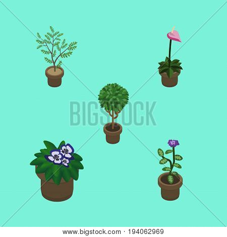 Isometric Plant Set Of Fern, Flower, Grower And Other Vector Objects. Also Includes Plant, Flowerpot, Pot Elements.