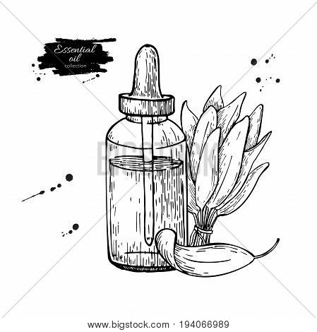 Sage essential oil bottle and sage leaves hand drawn vector illustration. Isolated plant drawing for Aromatherapy treatment, alternative medicine, beauty and spa, cosmetic ingredient.