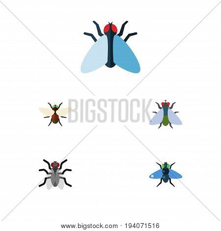 Flat Icon Fly Set Of Gnat, Housefly, Dung And Other Vector Objects. Also Includes Gnat, Bluebottle, Fly Elements.