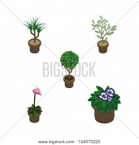 Isometric Flower Set Of Flowerpot, Grower, Houseplant And Other Vector Objects. Also Includes Flowerpot, Plant, Botany Elements.