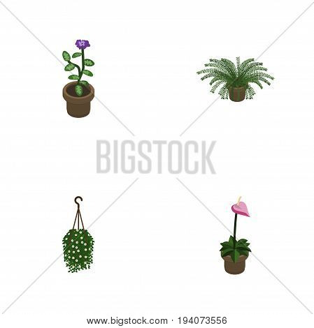 Isometric Flower Set Of Plant, Grower, Flower And Other Vector Objects. Also Includes Blossom, Fern, Hanging Elements.