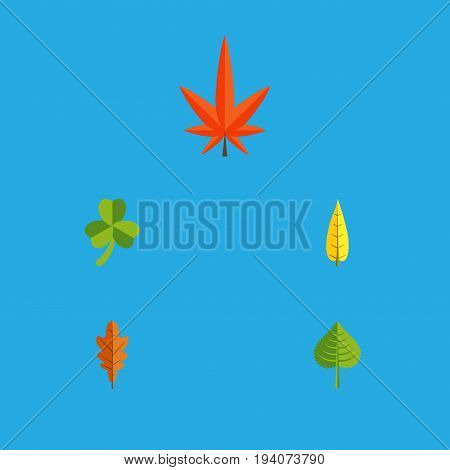 Flat Icon Maple Set Of Aspen, Hickory, Maple And Other Vector Objects. Also Includes Hickory, Leaf, Alder Elements.