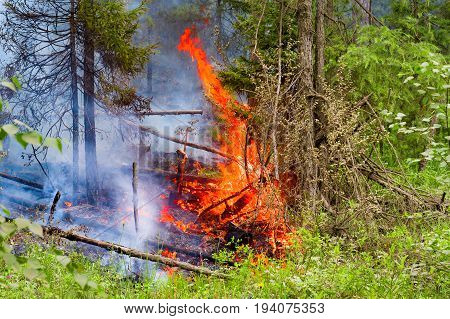 Fire in the summer forest. Careless handling of fire. Spontaneous ignition.