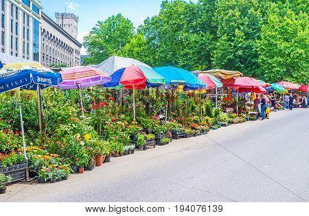 Tbilisi Flower Market