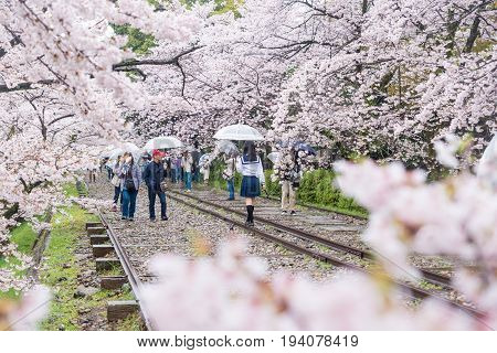 Kyoto Japan - April 9 2017: People enjoy spring season at Keage incline with sakura (cherry blossoms) Kyoto.