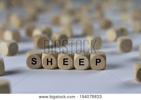 Sheep - Cube With Letters, Sign With Wooden Cubes
