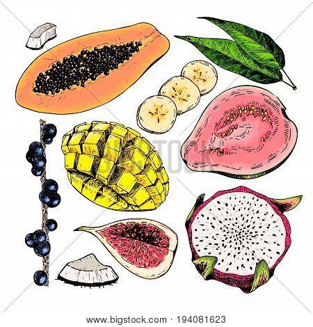 Vector hand drawn exotic fruits. Engraved smoothie bowl ingredients. Colored icon set. Tropical sweet food. Fig mango pitaya banana acai guava coconut. Use for exotic restaurant food party