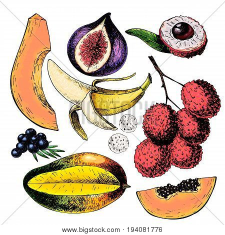 Vector hand drawn exotic fruits. Engraved smoothie bowl ingredients. Colored icon set. Tropical sweet food. Lychee fig mango pitaya banana acai. Use for exotic restaurant food party