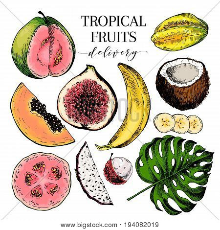 Vector hand drawn exotic fruits. Engraved smoothie bowl ingredients. Colored icon set. Tropical sweet food. Carambola fig monstera pitaya banana lychhe guava. for exotic restaurant food party