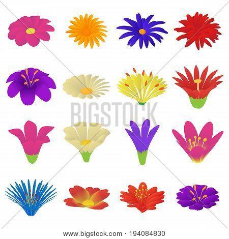 Detailed flowers icons set. Cartoon illustration of 16 detailed flowers vector icons for web