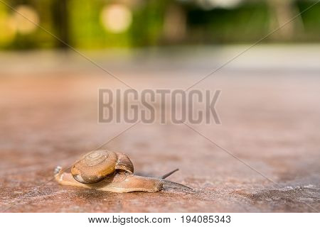 Snail crawling on the floor of stone slowly. This image is reminiscent of the rhetoric of