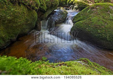 brook in forest Sumava Czech republic Europe