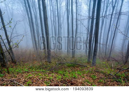 Leafless trees covered in cold fog in a forest