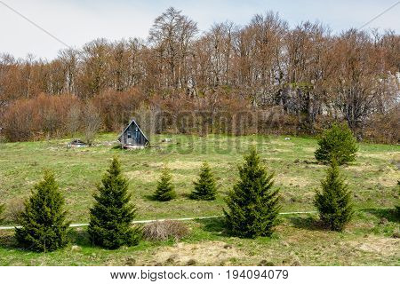 Small mountain hut on a hill with pine trees in the foreground and leafless trees in the background