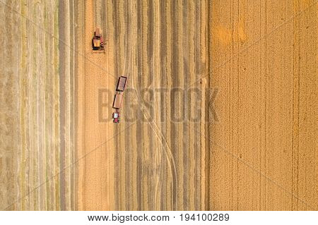 Combine Harvester And Tractor With Trailers In Wheat Field During Harvest