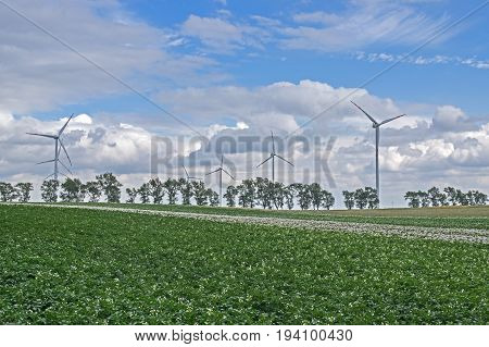 The photo shows a group of wind turbines. They stand among cultivated fields. In the foreground you can see the potato crop. In the distance, there are a number of deciduous trees. Propulsion power plants are moving. It is sunny day.