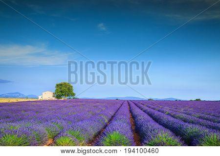 Stunning violet lavender fields near Valensole village Provence region France Europe