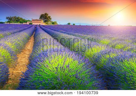Stunning sunset landscape and violet lavender fields near Valensole village Provence region France Europe