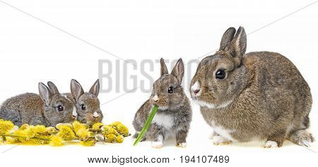spring or easter picture with easter eggs and baby animals