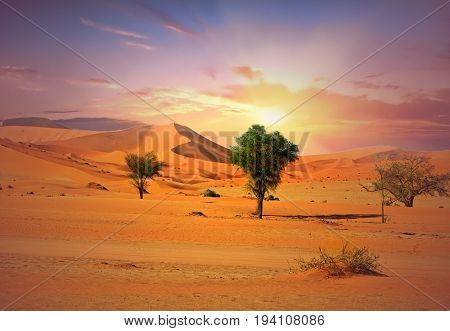 Namibi Naukluft National Park at sunrise with a beautiful hazy sky against golden sand dunes