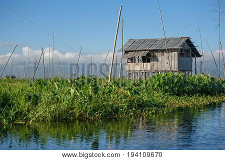 Traditional wood house with gable roof and green floating garden on Inle lake located in the Nyaungshwe Township of Taunggyi Shan State Myanmar