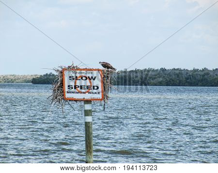Manatees Danger Sign with Slow Down Speed Minimum Wake and Osprey or fish hawk (Pandion haliaetus) sitting on signpost USA Florida Everglades National Park