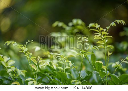 closeup of beautiful fresh green leaves in spring season use for background in natural environment and health care concepts