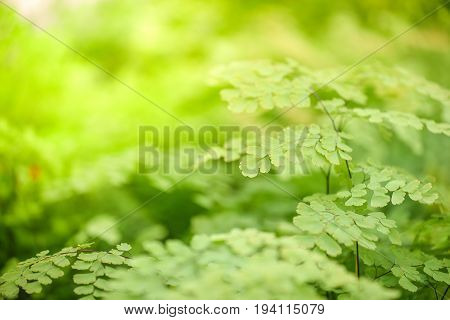 closeup of fresh green leaves with beautiful sunlight in spring season use for background in natural environment and health care concepts