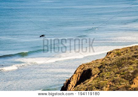 Torrey Pines cliff in pacific ocean in San Diego California with bird flying
