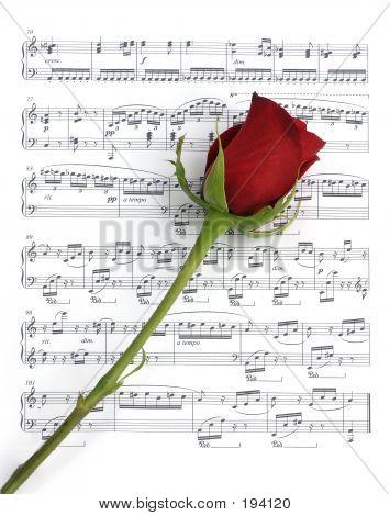 Single Music Rose