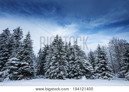a beautiful winter landscape - winter picture