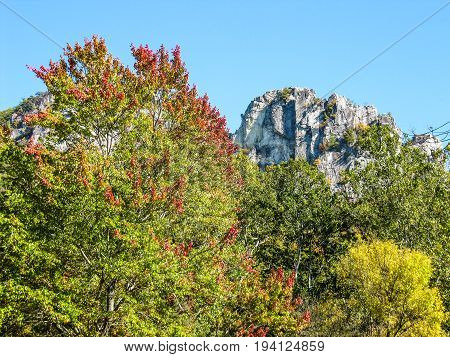Tall Seneca Rocks cliffs in West Virginia during autumn with red and yellow foliage on trees