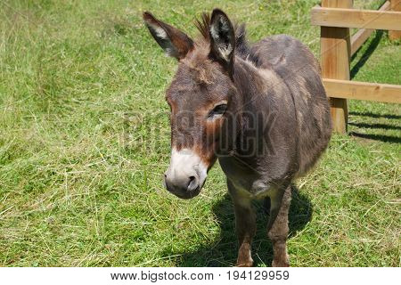 jackass donkey gray mammal enclosure field farming livestock agriculture