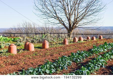 Charlottesville USA - January 20 2013: Vegetable garden on mountain in Monticello Thomas Jefferson's home