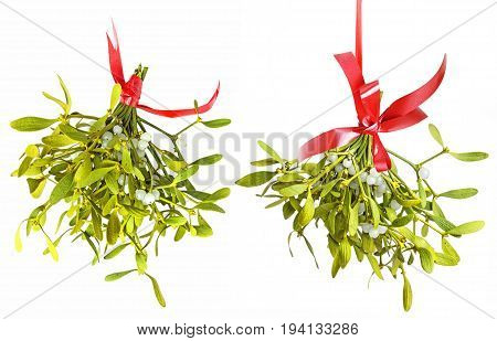a mistletoe isolated on a white background