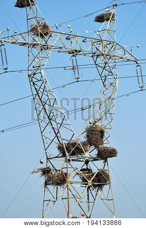 Nests of storks on the mast of a high-voltage power line