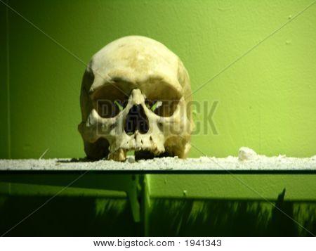 Cannibal Victim