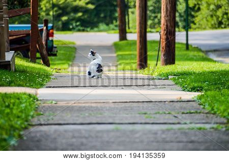 Black and white cat sitting on sidewalk in neighborhood by house porch front yard