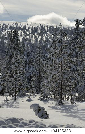 Winter landscape with snow covered trees, Sälen in Sweden.