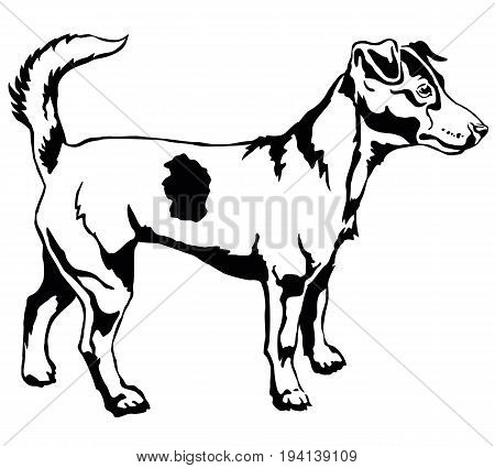 Decorative portrait of standing in profile dog Jack Russell terrier vector isolated illustration in black color on white background