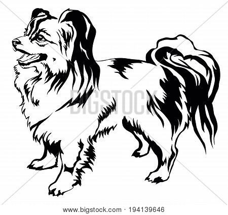 Decorative portrait of standing in profile dog Papillon vector isolated illustration in black color on white background
