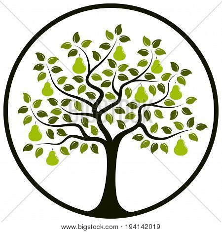 vector pear tree in round isolated on white background