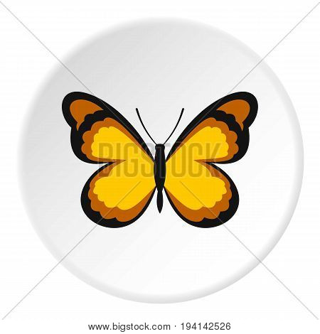 Insect butterfly with pattern on wings icon in flat circle isolated vector illustration for web