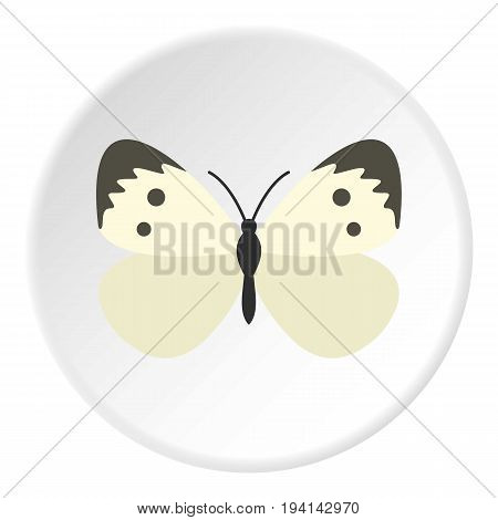 Butterfly with pattern on wings icon in flat circle isolated vector illustration for web